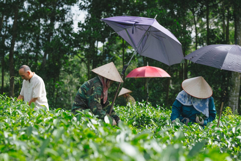 vietnam luxury holidays